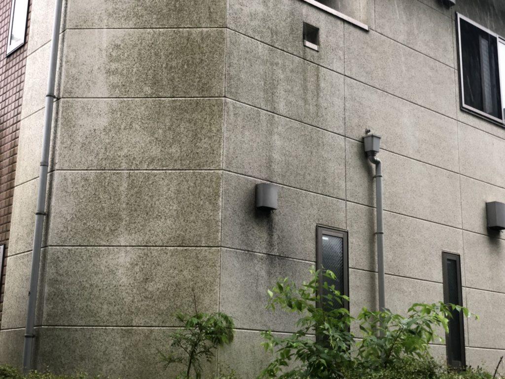 外壁の苔やカビ